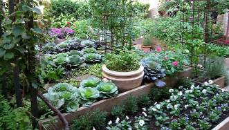 kitchen garden ideas northeast gardening my organic kitchen garden