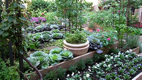 Kitchen Gardening Ideas Northeast Gardening My Organic Kitchen Garden
