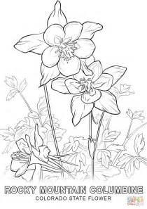 coloring pictures of state flowers colorado state flower coloring page free printable