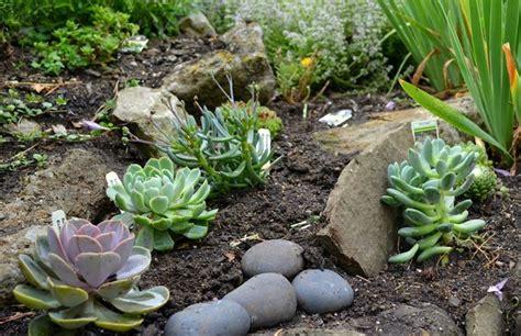 giardini e piante giardini piante grasse piante grasse piante giardino