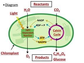 photosynthesis unweaving the rainbow