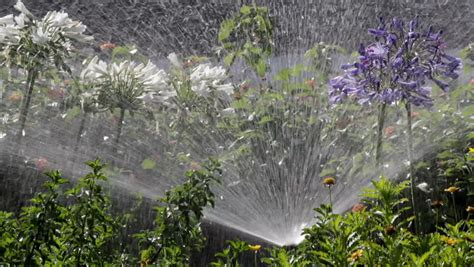 flower bed sprinklers garden irrigation spray watering flower bed stock footage