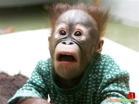 Shocked Face Meme - 12 best surprised face images on pinterest ha ha funny stuff and funny things