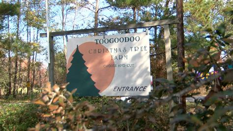 secrets of a christmas tree farm wbrc magic city weekend