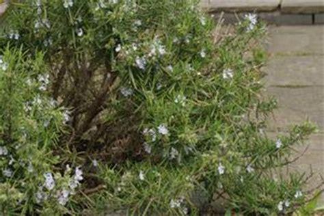 piccola area di terreno con erba e fiori piante da giardino per siepi russelmobley