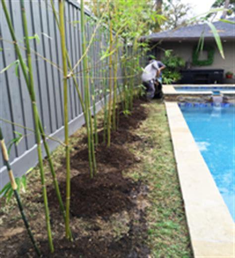Bamboo Garden Houston by Garden Design 68475 Garden Inspiration Ideas