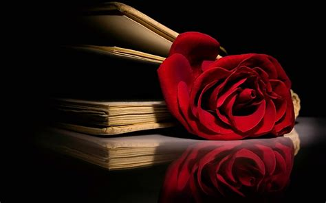 roses books roses images hd wallpaper and background