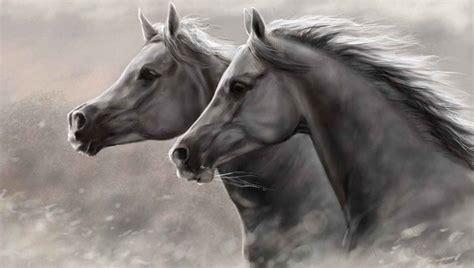 wallpapers hd fondos de pantalla de caballos varias fondos pantalla fotos hd imagenes caballos silvestres wild