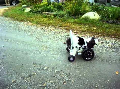 wheelchair for front legs an eddie s wheels front leg wheelchair for sugar