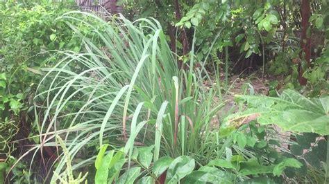 Natural Weed Killer For Vegetable Garden Youtube Grass Killer For Vegetable Gardens