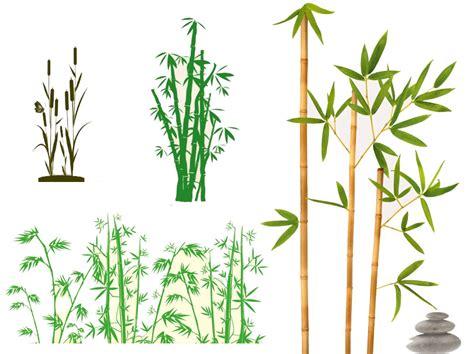 Deko Aufkleber Bambus by Wandtattoo Bambus Pflanzen Wandsticker