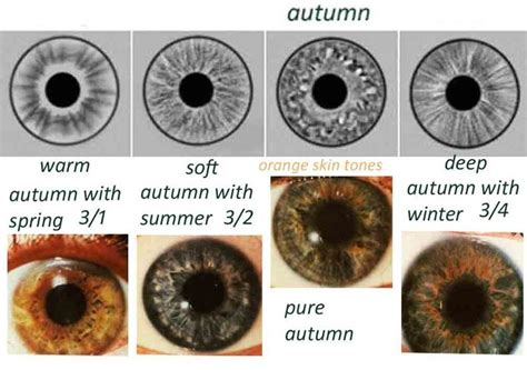 what is my color season expressing your eye types iridology what s
