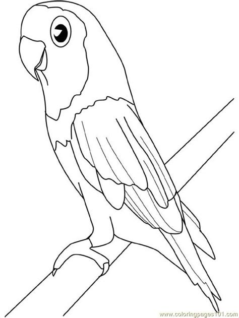 coloring pages parakeet birds gt parrots free printable
