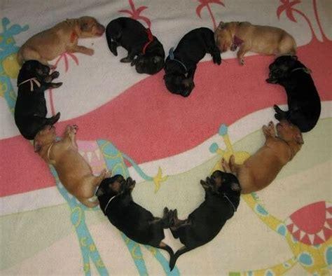 puppy lover puppy