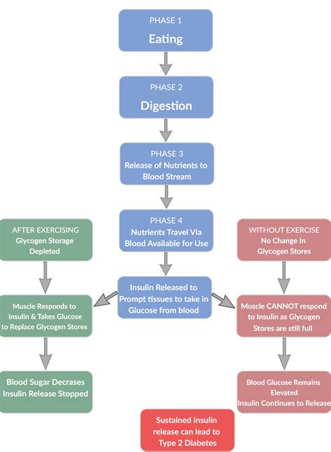 blood sugar flowchart conceptualising the effect of exercise on blood sugar