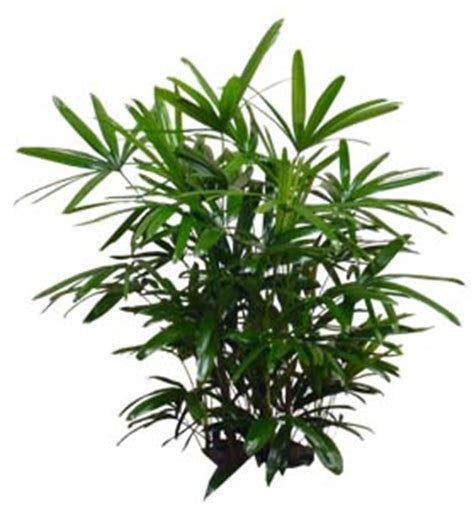 houseplants for low light areas low light indoor plants for houston area office lobby and home