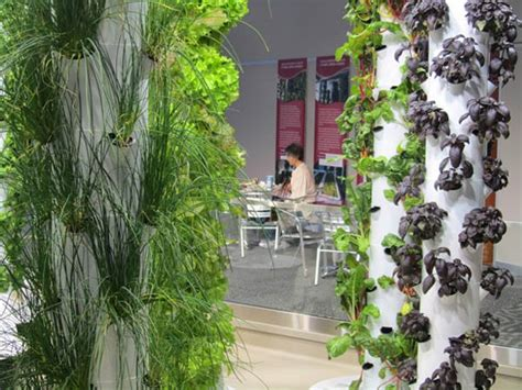 Screen Wall Vertikultur inside peek at o hare airport s vertical farm gardens