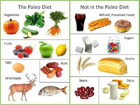 vegetables on paleo diet the paleo diet 5 fast facts you need to heavy