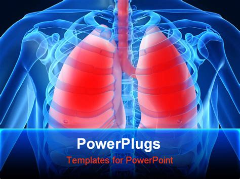 powerpoint themes lungs powerpoint template inside of human chest with lunch and