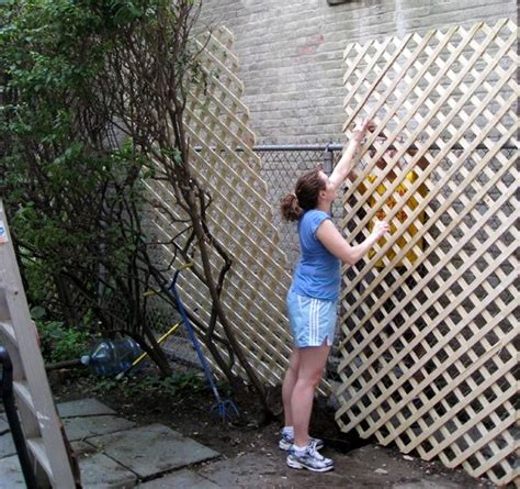 cover a ugly boring chain linked fence with lattice and plant climbing plants to grow up it
