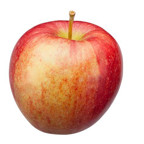 apple varieties michigan apple varieties michigan apple committee
