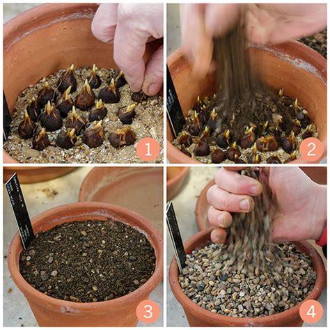 growing species tulips timber press