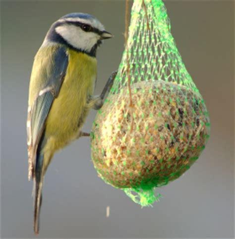 alimentazione passerotto come preparare il mangime per uccelli pet magazine