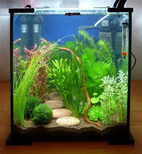 Aquarium Dekorieren Ideen by 25 Best Ideas About Betta Tank On Betta