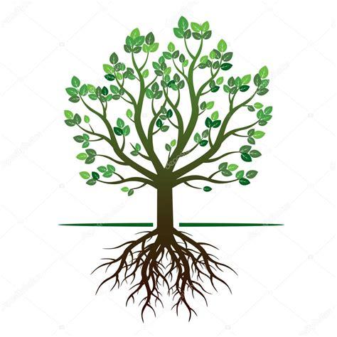 albero clipart verde primavera albero e radici illustrazione di vettore