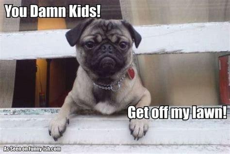 pug kid meme damn kitties friends pug meme grumpy and