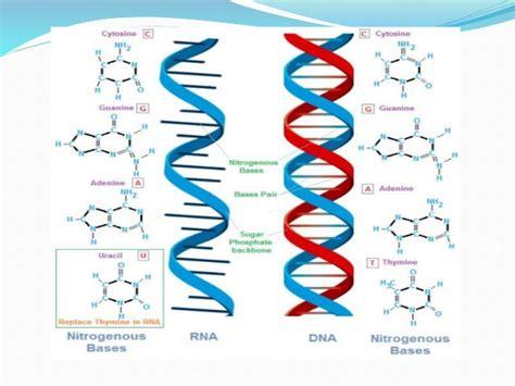 cadenas adn y arn sintesis arn 1