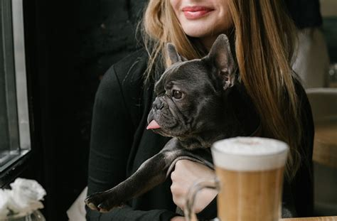 puppy cafe nyc nyc s cafe is opening this winter well
