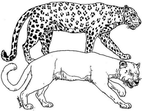 snow tiger coloring page baby snow leopard coloring pages