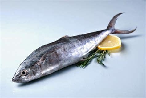 Timbangan Untuk Ikan arsip untuk kerupuk ikan tenggiri distributor pusat jual beli alat mesin usaha anda