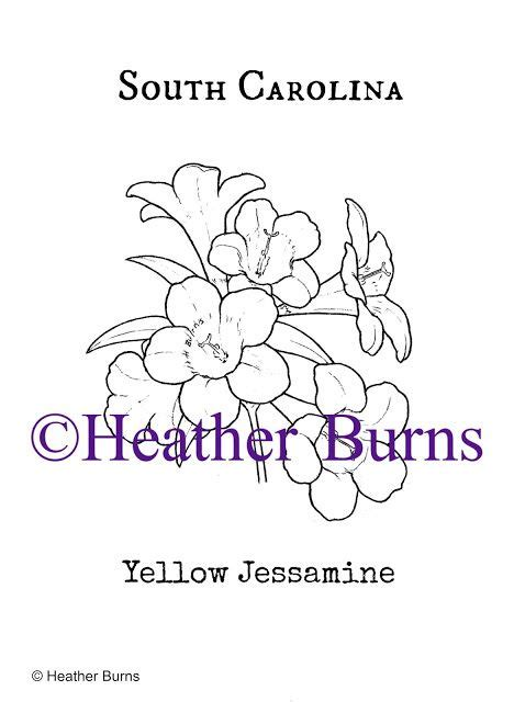 yellow jessamine coloring page 251 best usa state symbols images on pinterest coloring