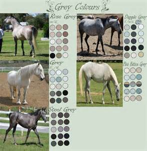 can horses see color grey colours by edithsparrow on deviantart