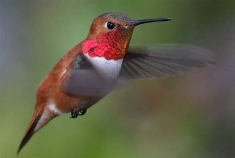 top 28 humming bird food food recipes hummingbird