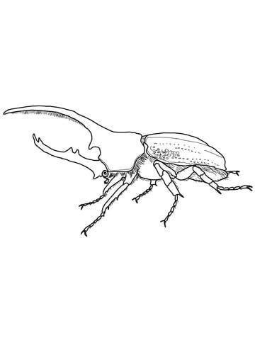 japanese beetle coloring page hercules beetle coloring page free printable coloring pages