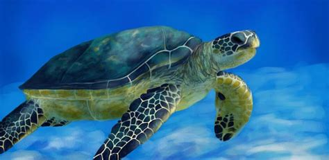 sea turtle live wallpaper free sea turtle live wallpaper v2 0 snappzmarket apk android