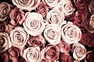 Graffiti Wall Murals Wallpaper tapet rosor fototapet ros rosa r 246 da romantik