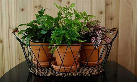 breathe clean  indoor plants  improve air quality