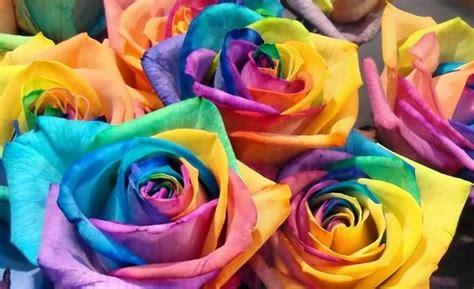 wallpaper bunga warna warni bergerak kumpulan gambar bunga yang indah kumpulan gambar