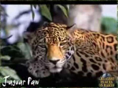 jaguar paw forest jaguar paw jungle resort belize eco tourism adventure
