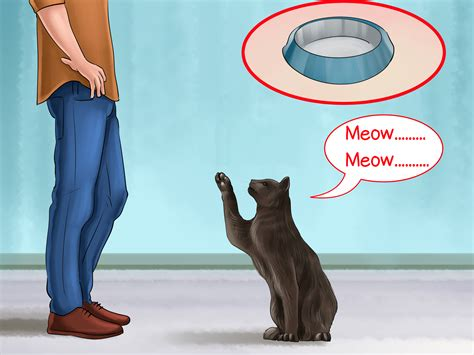 how to get a and cat to get along 4 ways to get a cat to stop meowing wikihow