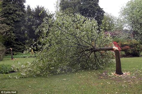 the split cherry tree 5 points answers mystery axe who hacked four cherry trees in birmingham park in the
