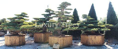Garten Bonsai Kaufen