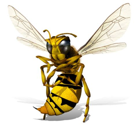 wasp tattoo design 3d wasp
