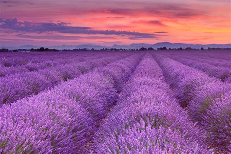 Lavendelfelder Provence by Meer Aus Lavendel Provence Im Lavendel Rausch 187 Oh Wow