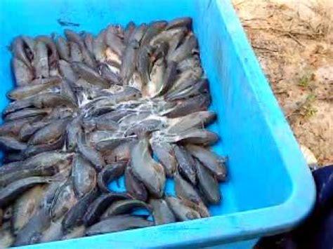 5 in 1 set pembersih tanki ikan ternakan ikan puyu di jengka pahang