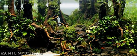 aquascape competition aquascape competiti sequa